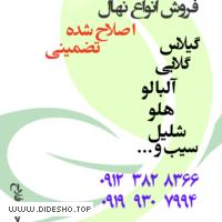 نهالستان احمدفلاح